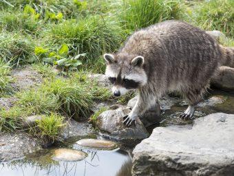 wildlife-animal-capture